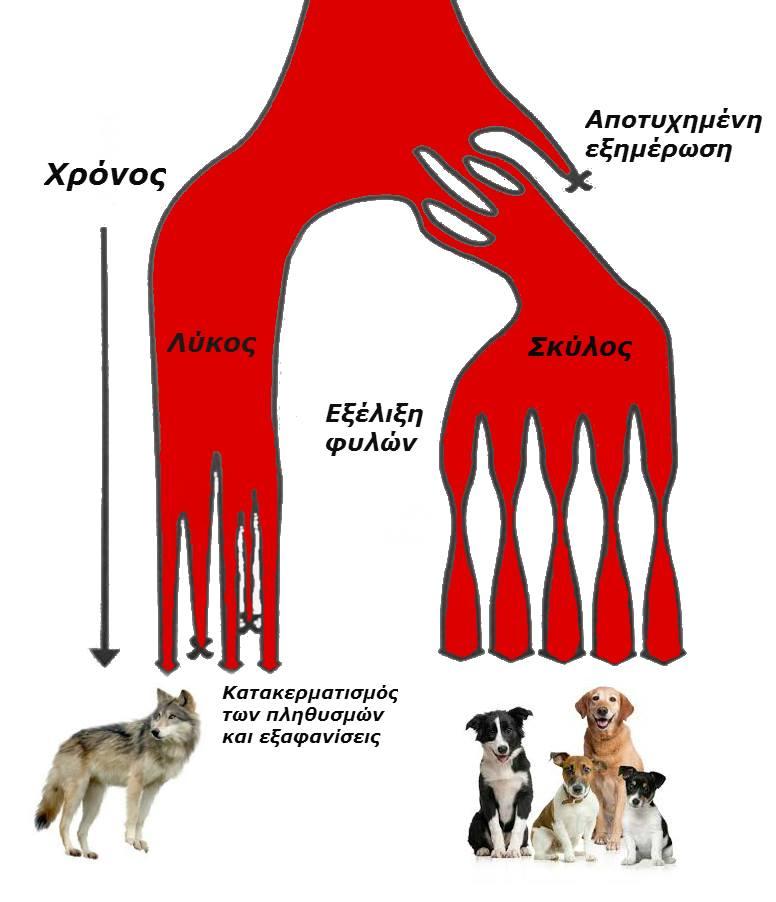 dominance dog aggression aggressive επιθετικότητα σκύλος λύκος δαγκώνει Δρ  Καραγιάννης κτηνίατρος veterinarian behaviour behavior