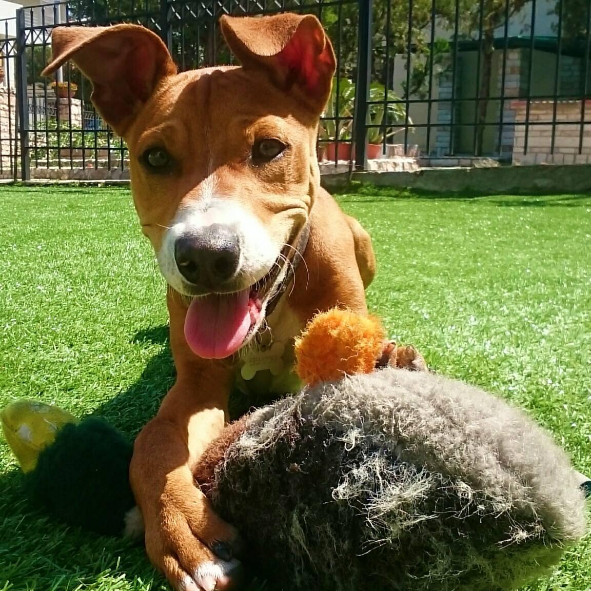 ελληνικό ινστιτούτο συμπεριφοράς σκύλου και γάτας, συμπεριφορά σκύλου, εκπαίδευση σκύλου, εκπαιδευτής σκύλων, σκύλος δαγκώνει