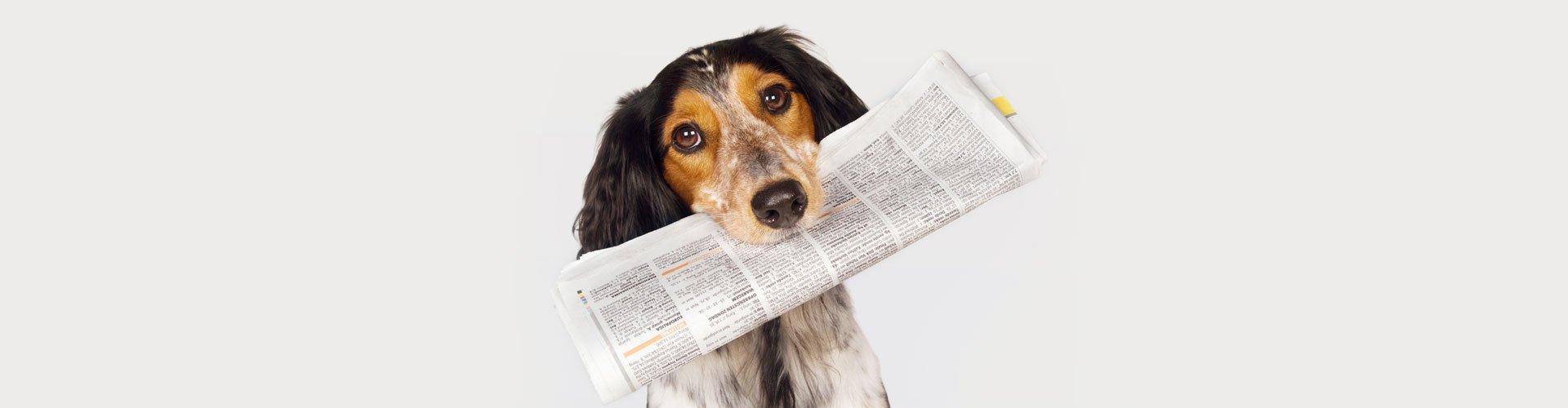 O Δρ. Καραγιάννης στη Διημερίδα για την Προστασία των Ζώων Συντροφιάς